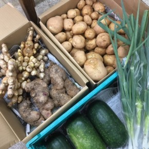 1/12(fri)本日の入荷です。  ご好評いただいているマサヨさんの無農薬栽培の新ジャガ・長ねぎ・山芋・冬瓜・生姜が入荷しました!