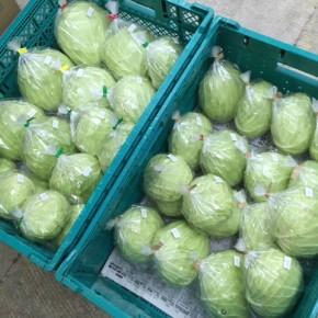 自然栽培きゃべつ祭り〜!  うるま市 玉城勉さんの自然栽培のキャベツが入荷しました!今季の勉さんの栽培は昨年とはひと味違う!?どんどん収穫して、次々と植え付けて行くそうですヨ。今後にもご期待下さい!!