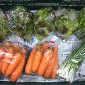1/9(tue)本日の仕入れです。  北中城村ソルファコミュニティさんの自然栽培のベビーリーフ・人参・ネギが入荷しました!
