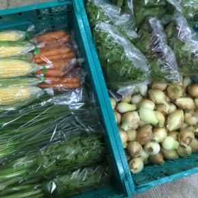2/8(thu)本日の仕入れです。  糸満市 中村一敬さんの自然栽培の人参・サニーレタス・グリーンリーフ・ロメインレタス・セロリ・にら・無農薬栽培の玉ねぎ・トウモロコシ・青ネギが入荷しました!