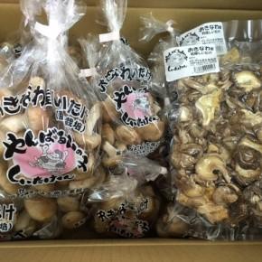2/23(fri)本日の入荷です。  やんばる産おがくずで菌床栽培された生椎茸・乾燥椎茸が入荷しました!