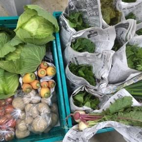 今帰仁村 片岡農園さんの無農薬栽培の人参・じゃがいも・中かぶ・中玉トマト・リーフレタス・きゃべつ・春菊・ルッコラ・小ねぎ・間引きほうれん草が入荷しました!