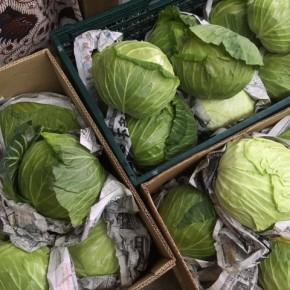 先週に引き続きご好評いただいている大宜味村 奈良さんの無農薬栽培のキャベツが入荷しました!  奈良さんのキャベツは大振りでずっしりと葉が詰まっていて食べ応えがあります!!