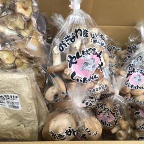 2/10(sat)本日の入荷です。  やんばる産おがくずで菌床栽培された生椎茸・乾燥椎茸・粉末椎茸が入荷しました!
