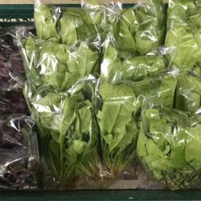 2/1(thu)本日の仕入れです。  八重瀬町 島袋悟さんの自然栽培のほうれん草、糸満市 金城聡さんのハンダマが入荷しました!