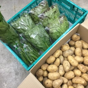 2/3(fri)本日の仕入れです。  糸満市 中村一敬さんの自然栽培の新ジャガ(アローワ)・サニーレタス・ロメインレタス・モロッコインゲン・セロリが入荷しました!