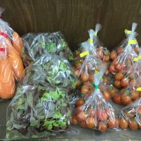 2/13(tue)本日の仕入れです。  うるま市 玉城勉さんのミニトマト、北中城村ソルファコミュニティさんの自然栽培のベビーリーフ・人参が入荷しました!