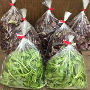 2/19(mon)本日の仕入れです。  北中城村ソルファコミュニティさんの自然栽培のベビーリーフ・春菊が入荷しました!