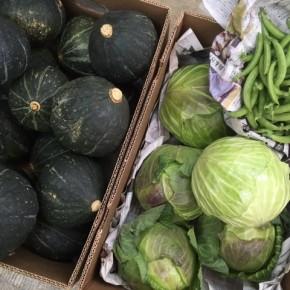 ご好評いただいている大宜味村 奈良さんの無農薬栽培のスナップエンドウ・キャベツ・栗カボチャが再入荷しました!
