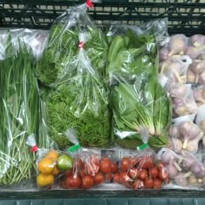 3/12(mon)本日の仕入れです。  うるま市 玉城勉さんの自然栽培のミニトマト・ニンニク、北中城村ソルファコミュニティさんの自然栽培のサラダほうれん草・にら・四季柑・人参葉が入荷しました!