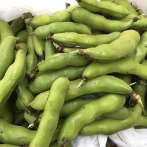 読谷村 当真さんの無農薬栽培のそら豆が入荷しました!  小粒ですが味がギュッと詰まっていますよ。