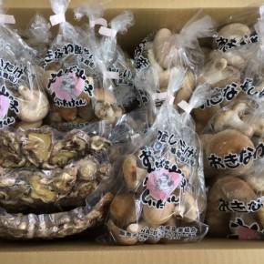 3/9(fri)本日の入荷です。  やんばる産おがくずで菌床栽培された生椎茸・乾燥椎茸が入荷しました!
