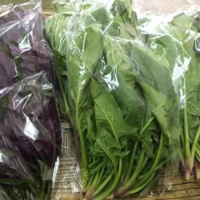3/1(thu)本日の仕入れです。  八重瀬町 島袋悟さんの自然栽培のほうれん草、糸満市 金城聡さんのハンダマが入荷しました!