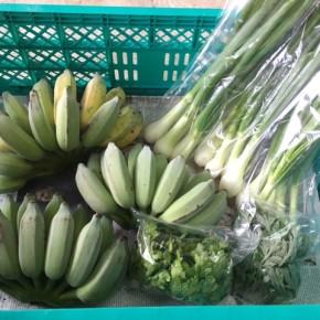 3/5(mon)本日の仕入れです。  うるま市 玉城勉さんの自然栽培の銀バナナ、北中城村ソルファコミュニティさんの自然栽培の葉付き玉ねぎ・よもぎ・春菊が入荷しました!