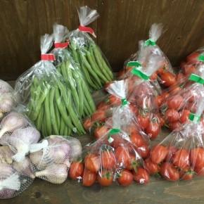 うるま市 玉城勉さんの自然栽培のミニトマト・ニンニク・インゲン、北中城村ソルファコミュニティさんの自然栽培のヨモギ・春菊が入荷しました!