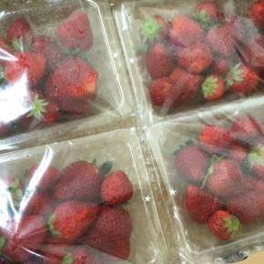 国頭から森岡さんのイチゴが到着しました!お天気が続いているので大きく真っ赤に育っています。今回はいつも以上に状態の良いイチゴ達ですよ!