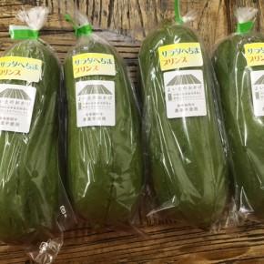 シーズンはずれですが残していた苗から収穫できました!糸満市 金城聡さんの無農薬栽培のサラダヘチマが入荷しました!!