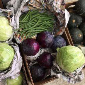 ご好評いただいている大宜味村 奈良さんの無農薬栽培の栗カボチャ・赤きゃべつ・きゃべつ・インゲンが入荷しました!