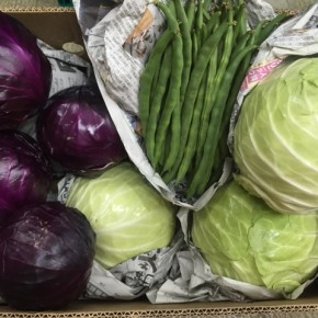ご好評いただいている大宜味村 奈良さんの無農薬栽培の赤きゃべつ・きゃべつ・インゲンが入荷しました!