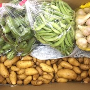 マサヨさんの無農薬栽培のスナップエンドウ、そら豆、島にんにく、じゃが芋(メークイン)が入荷しました!
