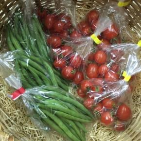 うるま市 玉城勉さんの自然栽培のミニトマト・インゲンが入荷しました!