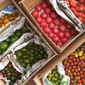 ご好評いただいている嘉数農園さんのトマトが入荷しました!  種類は嘉数トマト(大玉)・黄色オレンジmix(中玉)・グリーンゼブラ(中玉)・カラフルミニトマト・マーブルミニトマト(長)・マーブルミニトマト(丸)・カリコリミニトマト・サンマルツァーノ(加熱調理トマト)です。  いろんな種類があり、それぞれ個性があります。ぜひその味わいをお試し下さい!!