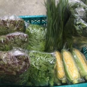 4/19(thu)本日の仕入れです。  糸満市 中村一敬さんの自然栽培のトウモロコシ・ほうれん草・サニーレタス・リーフレタス、無農薬栽培のニラが入荷しました!