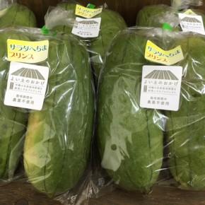 4/19(thu)本日の仕入れです。  糸満市 金城聡さんの無農薬栽培のサラダヘチマが入荷しました!