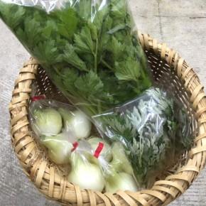 北中城村 ソルファコミュニティさんの自然栽培の新タマネギ・セロリ・よもぎが入荷しました!