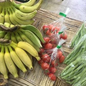 4/2(mon)本日の仕入れです。  うるま市 玉城勉さんの自然栽培のブラジル島バナナ・ミニトマト・インゲンが入荷しました!