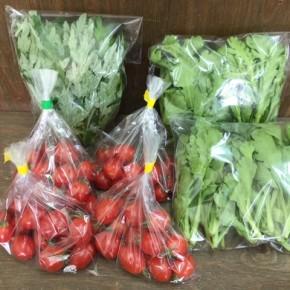 4/9(mon)本日の仕入れです。  うるま市 玉城勉さんの自然栽培のミニトマト、北中城村ソルファコミュニティさんの自然栽培のヨモギ・春菊が入荷しました!