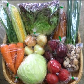 【第75回目】わが家のハルラボ商店『お野菜おまかせBOX』は6/4(mon)・5(tue)・6(wed)予約受付!6/9(sat)発送。受付はお電話にて承ります。☎098-943-9575(詳細はコチラをクリック)※写真は前回の内容です。