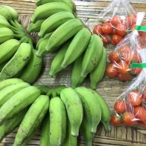 5/18(fri)本日の仕入れです。  うるま市 玉城勉さんの自然栽培のブラジル島バナナ・ミニトマトが入荷しました!