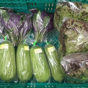 5/29(tue)本日の仕入れです。  糸満市 中村一敬さんの自然栽培のサニーレタス、糸満市 金城聡さんの無農薬栽培のサラダヘチマ・ハンダマが入荷しました!