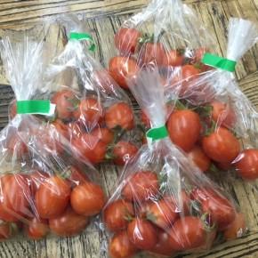 5/2(wed)本日の仕入れです。  うるま市 玉城勉さんの自然栽培のミニトマトが入荷しました!