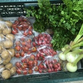 今帰仁村 片岡農園さんの無農薬栽培の無農薬栽培のパクチー・中玉トマト・ミニトマト・春菊・新玉ねぎ・じゃがいもが入荷しました!
