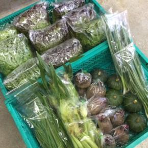 5/8(tue)本日の仕入れです。  糸満市 中村一敬さんの自然栽培のサニーレタス・グリーンリーフ・ロメインレタス・ビーツ、無農薬栽培のベビーコーン・にら・青ネギが入荷しました!