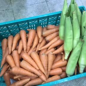 5/10(thu)本日の仕入れです。  八重瀬町 島袋悟さんの自然栽培のトウモロコシ・人参が入荷しました!