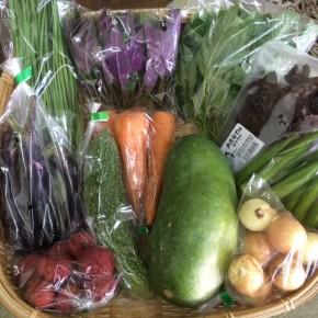 【第77回目】わが家のハルラボ商店『お野菜おまかせBOX』は7/3(tue)4(wed)予約受付中!7/7(sat)発送。受付はお電話にて承ります。☎098-943-9575(詳細はコチラをクリック)※写真は前回の内容です。