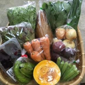 【第76回目】わが家のハルラボ商店『お野菜おまかせBOX』は本日6/20(wed)まで予約受付中!6/23(sat)発送。受付はお電話にて承ります。☎098-943-9575(詳細はコチラをクリック)※写真は前回の内容です。