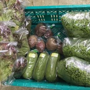 6/5(tue)本日の仕入れです。  糸満市 中村一敬さんの自然栽培のサニーレタス・グリーンリーフ・ビーツ、糸満市 金城聡さんの無農薬栽培のサラダヘチマが入荷しました!