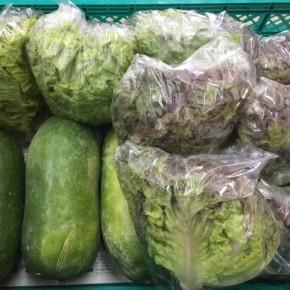 6/30(sat)本日の仕入れです。  糸満市 中村一敬さんの自然栽培のサニーレタス・グリーンリーフ・冬瓜が入荷しました!
