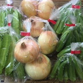 6/4(mon)本日の仕入れです。  北中城村ソルファコミュニティさんの自然栽培の角オクラ・玉ねぎ・うりずん豆が入荷しました!