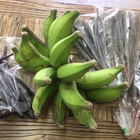 6/4(mon)本日の仕入れです。  うるま市 玉城勉さんの自然栽培の黒人参・なす・ブラジル島バナナが入荷しました!