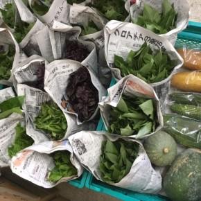 今帰仁村 片岡農園さんの無農薬栽培の無農薬栽培のゴーヤー・モーウィ・青しそ・赤しそ・かぼちゃ・冬瓜・ウンチェバー・モロヘイヤ・ツルムラサキ・バジルが入荷しました!