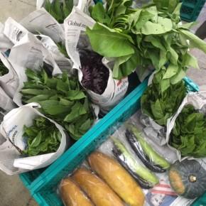 今帰仁村 片岡農園さんの無農薬栽培の無農薬栽培のなす・モーウィ・かぼちゃ・ウンチェバー・ツルムラサキ・モロヘイヤ・青しそ・赤しそ・バジルが入荷しました!