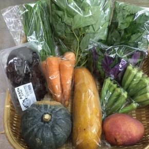 【第79回目】わが家のハルラボ商店『お野菜おまかせBOX』は7/30(mon)・31(tue)・8/1(wed)予約受付!8/4(sat)発送。受付はお電話にて承ります。☎098-943-9575(詳細はコチラをクリック)※写真は前回の内容です。