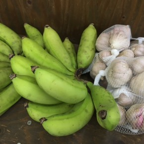 7/6(fri)本日の仕入れです。  うるま市 玉城勉さんの自然栽培のニンニク・ブラジル島バナナが入荷しました!
