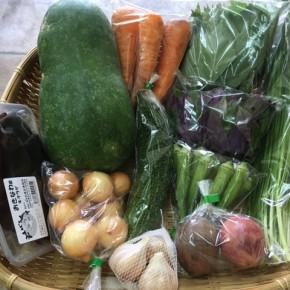 第77回目】わが家のハルラボ商店『お野菜おまかせBOX』は先週土曜日に発送いたしました。今回の内容は自然栽培の人参・丸オクラ・島ニンニク・ペコロス玉ねぎ・冬瓜・にら、  無農薬栽培のモロヘイヤ・ハンダマ・ゴーヤー・パッションフルーツ・キクラゲをお送り致しました。次回受付は7/17(tue)・18(wed)お電話にて承ります。☎098-943-9575(詳細はコチラをクリック)