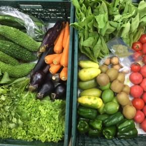やんばるから森さんの無農薬栽培の野菜が到着しました!  本日の入荷はパクチー・乾燥ローリエ・リーフレタス・小松菜・なす・水なす・トマト・ピーマン・きゅうり・アバシゴーヤー・マッシュルーム・島キウイ・青島レモン・台湾レモン・タイガーナッツ・からし菜・ちんげん菜・人参です。県産ではこの時期にあまりない野菜がたくさんでうれしいですね〜!!